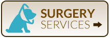 Surgery Services